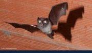 Escoitando o que non se escoita: morcegos no monte dá Fraga. OMA