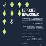 Especies invasoras: Eliminación de flora exótica no Monte da Fraga. OMA