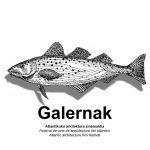 GALERNAK. Festival de cine de arquitectura do Atlántico